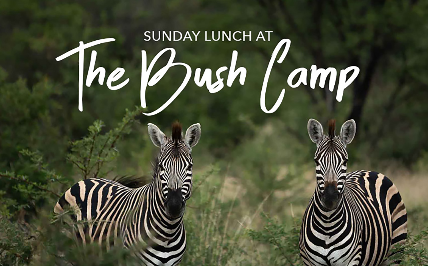 Bush Camp Harties